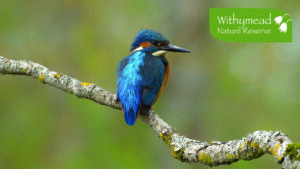 Withymead Nature reserve - booked visits @ Withymead Nature Reserve